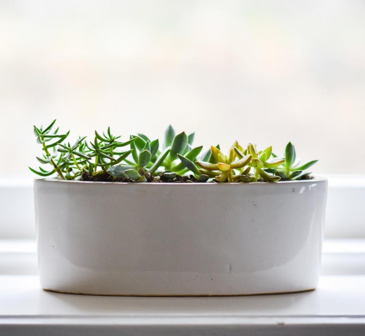 Studierende und Zimmerpflanzen